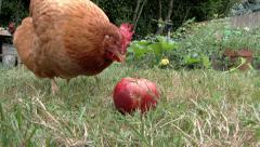 An Apple A Day Keeps The Chicken Away Stock Footage
