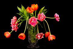 Tulip Floral Arrangement Stock Photos