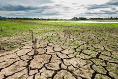 Green grass on cracked mud in the bottom of a river showing drought Stock Photos