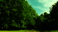 Forest clearing Stock Footage