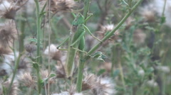 Meadow, thistles, grasshopper Stock Footage