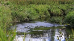 Calm river with green banks - stock footage