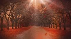 Autumn woods Stock Footage