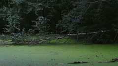 Splash in the swamp Stock Footage