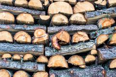 trunks cutted - stock photo