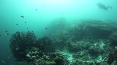 Wide shot of CoralReef with a scuba diver.  Stock Footage