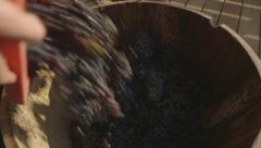 Unloading Grapes From Box (Canon Log) Stock Footage