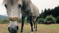 Stock Video Footage of Landscape,horses grazing in a vast field in northern Greece