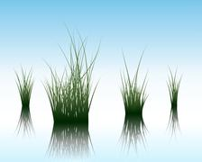 grass on water - stock illustration