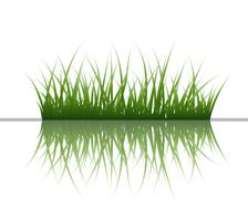 Grass on water Stock Illustration