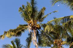 Coco-palm tree against blue sky Stock Photos