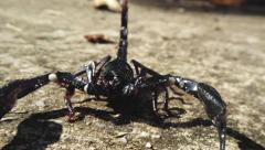 Detailed front view of running aggressive scorpion. Moving camera video Stock Footage