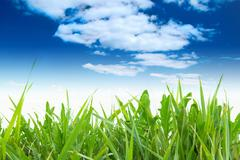 Green grass with cloudy sky Stock Photos