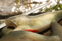 Fish filleting knife blade and perch fillets with gleaming water background - stock photo