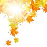 Autumn maple - stock illustration