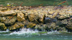 Video of a bird at Banias Spring shot in Israel. Stock Footage