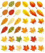 Collection of color autumn leaves - stock illustration