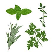 Fresh parsley, thyme, rosemary, and basil herbs. Aromatic leaves Stock Illustration