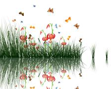 grass with reflections in water - stock illustration