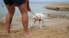 Man Playing with Dog on the Beach Stock Footage