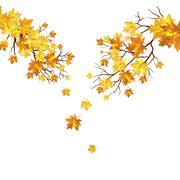 Stock Illustration of Autumn maple leaves background