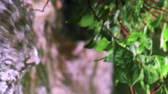 Stock Video Footage closeup of foliage and water in an aqueduct shot in Israel. Stock Footage