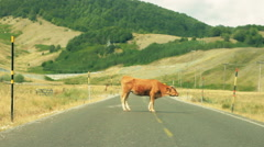 Bull in the middle blocking the road Stock Footage