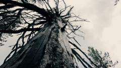 Scary mystical atomosphere, dead tree slow pan in dark moody forest Stock Footage