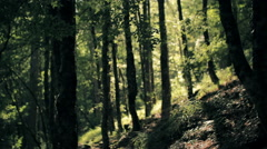 Tall trees in the deep forest of Valia Kalda Stock Footage