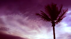 Time lapse tropical with light leak Stock Footage