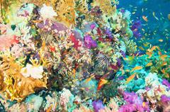 Colorful Coral Reef Stock Illustration