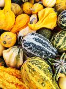 Colorful variety of gourds at the market - stock photo
