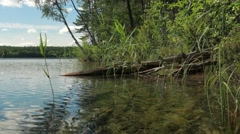Shore of clear-watered lake Valkiajärvi with sunken trees Stock Footage