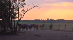 Herd of horses on animal farm ranch in paddock Stock Footage