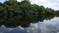 Wetland in Amazon, Brazil - stock footage