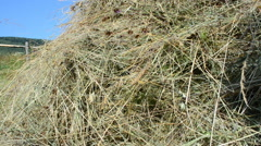 Hay on a meadow Stock Footage