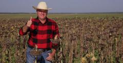 Happy Confident Farmer Man Thumbs Up Sign Hand Gesture Sunflower Field Farming Stock Footage