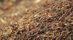 Close-up shot of ants moving on the surface of an ant-hill - stock footage