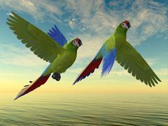 Military Macaw - stock illustration