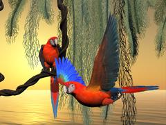Red and Green Macaws Stock Illustration