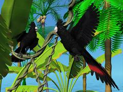 Red-tailed Black Cockatoos - stock illustration