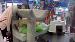 Stock Video Footage of Woman watching cat playing at pet store