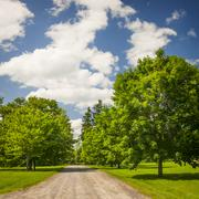 Stock Photo of Rural landscape with maple trees