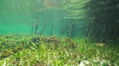 Shallow ocean floor with seagrass and small fish Stock Footage