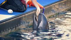 Zookeeper Feeding Fish To Dolphin Stock Footage
