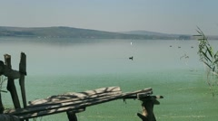 Bird flies super slow motion low over the lake with cane and wooden pier Arkistovideo
