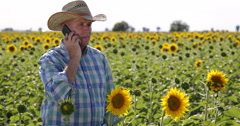 Farmer Man Agriculture Industry Phone Mobile Talk Sunflower Crop Grow Situation Stock Footage