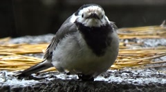 Little bird in the park. Stock Footage