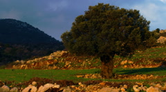 Video panorama of a pastoral hillside shot in Israel. - stock footage