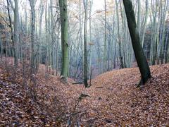 beech wood - stock photo